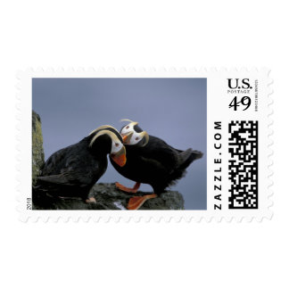 NA, USA, Alaska, Bering Sea, Pribilofs. Tufted Postage Stamp