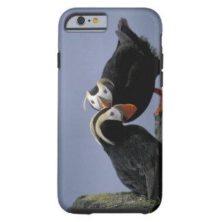 NA, USA, Alaska, Bering Sea, Pribilofs. Tufted Tough iPhone 6 Case
