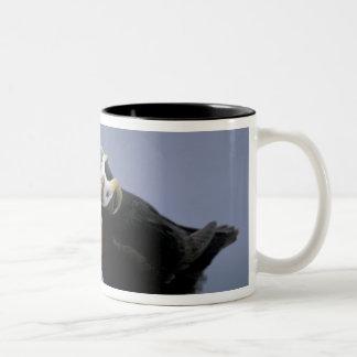 NA, USA, Alaska, Bering Sea, Pribilofs. Tufted Two-Tone Coffee Mug