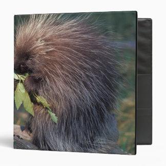 NA, USA, Alaska, Captive porcupine Vinyl Binders