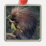 NA, USA, Alaska, Captive porcupine Metal Ornament