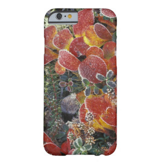 NA, USA, Alaska. Denali National Park. Bearberry 2 Barely There iPhone 6 Case