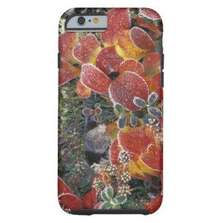 NA, USA, Alaska. Denali National Park. Bearberry 2 Tough iPhone 6 Case