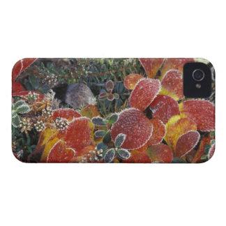 NA, USA, Alaska. Denali National Park. Bearberry 2 iPhone 4 Case-Mate Case