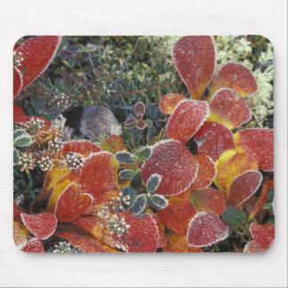 NA, USA, Alaska. Denali National Park. Bearberry 2 Mouse Pad