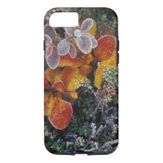 NA, USA, Alaska. Denali National Park. Bearberry 3 iPhone 8/7 Case