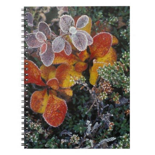 NA, USA, Alaska. Denali National Park. Bearberry 3 Spiral Notebooks