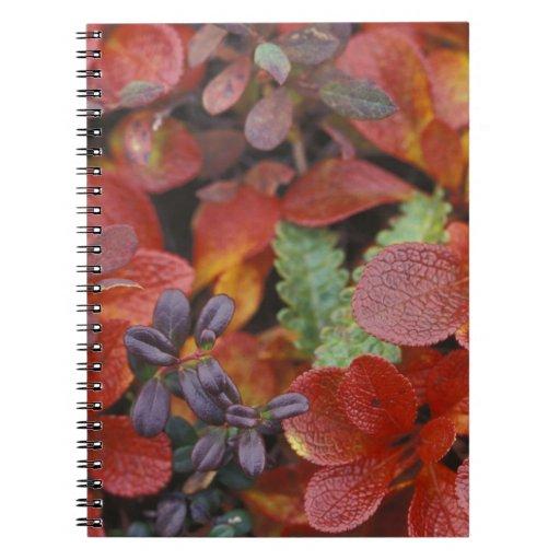 NA, USA, Alaska. Denali National Park. Bearberry Spiral Note Books