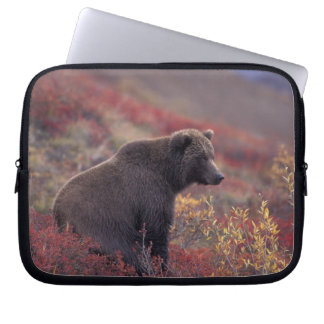 NA, USA, Alaska, Denali NP. A female grizzly Laptop Sleeve