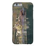 NA, USA, Alaska, Denali NP, Beaver collecting Barely There iPhone 6 Case