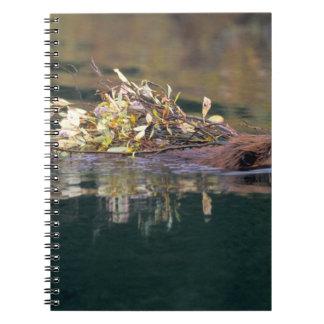NA, USA, Alaska, Denali NP, Beaver collecting Notebook