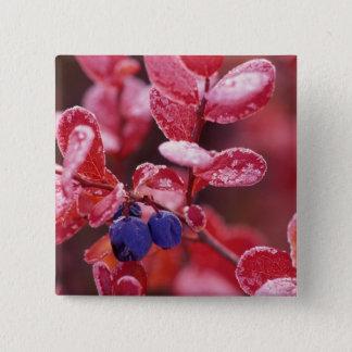 NA, USA, Alaska, Denali NP, Blue berries in Pinback Button