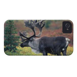 NA, USA, Alaska, Denali NP, Bull caribou 3 Case-Mate iPhone 4 Case