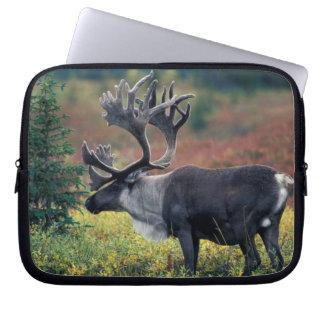 NA, USA, Alaska, Denali NP, Bull caribou 3 Laptop Sleeve