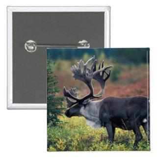NA, USA, Alaska, Denali NP, Bull caribou 3 Pinback Button