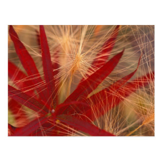 NA, USA, Alaska, Denali NP, Fireweed and wild Postcard