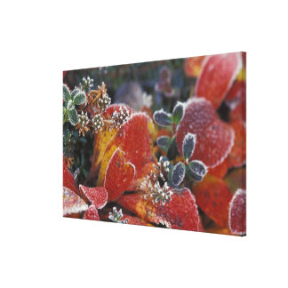 NA, USA, Alaska, Denali NP Frosted, fall-colored Canvas Print