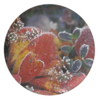 NA, USA, Alaska, Denali NP Frosted, fall-colored Melamine Plate