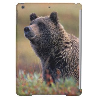 NA, USA, Alaska, Denali NP, Grizzly bear Case For iPad Air