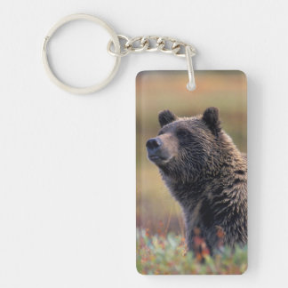 NA, USA, Alaska, Denali NP, Grizzly bear Keychain