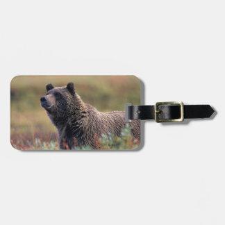 NA, USA, Alaska, Denali NP, Grizzly bear Luggage Tag