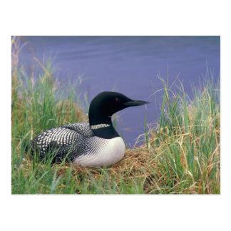 NA, USA, Alaska, Denali NP, Wonder Lake, 2 Postcard