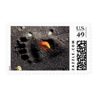 NA, USA, Alaska, Katmai NP, Brown bear pawprint Postage