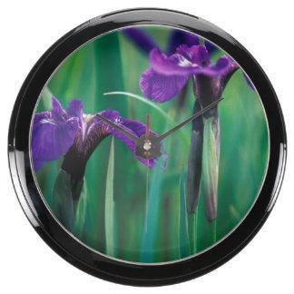 NA, USA, Alaska, Knight Island, Wild iris Aquarium Clocks