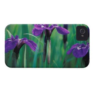 NA, USA, Alaska, Knight Island, Wild iris Case-Mate iPhone 4 Case