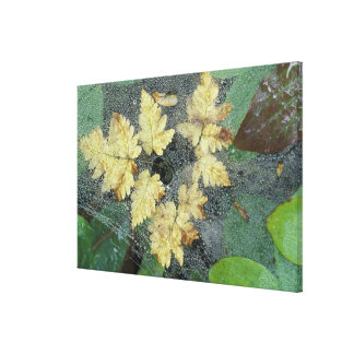 NA, USA, Alaska, Nancy Lake. Dew on spiderweb Canvas Print