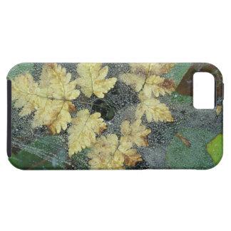 NA, USA, Alaska, Nancy Lake. Dew on spiderweb iPhone 5 Cases
