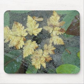 NA, USA, Alaska, Nancy Lake. Dew on spiderweb Mouse Pad