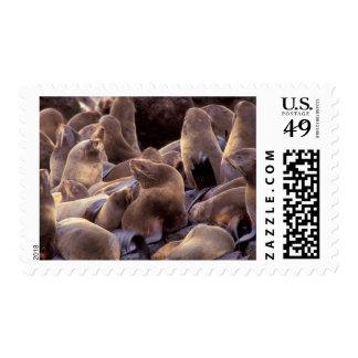 NA, USA, Alaska, Pribilof Islands, Northern fur Stamp
