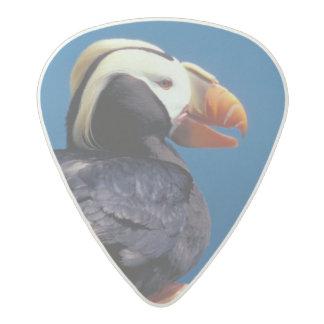 NA, USA, Alaska, Pribilof Islands, St. Paul Acetal Guitar Pick
