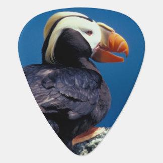 NA, USA, Alaska, Pribilof Islands, St. Paul Guitar Pick
