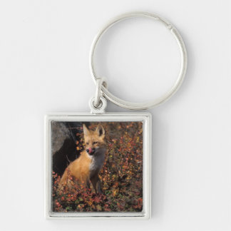 NA, USA, Alaska, red fox, Vulpes vulpes, in fall 2 Silver-Colored Square Keychain