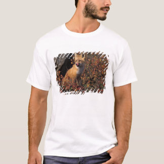 NA, USA, Alaska, red fox, Vulpes vulpes, in fall 2 T-Shirt