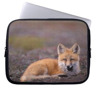 NA, USA, Alaska, red fox, Vulpes vulpes, in fall Computer Sleeve