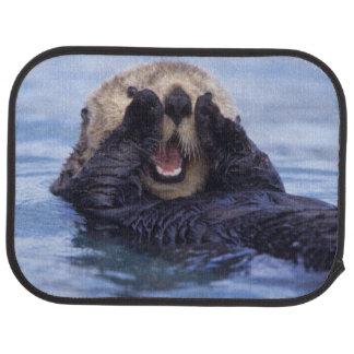 NA, USA, Alaska. Sea otters are the largest Car Mat