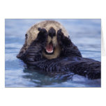 NA, USA, Alaska. Sea otters are the largest Greeting Card