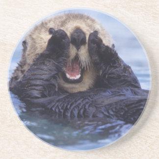 NA, USA, Alaska. Sea otters are the largest Drink Coaster