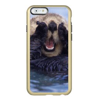 NA, USA, Alaska. Sea otters are the largest Incipio Feather® Shine iPhone 6 Case