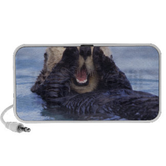 NA, USA, Alaska. Sea otters are the largest Laptop Speakers