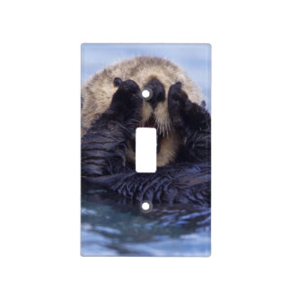 NA, USA, Alaska. Sea otters are the largest Light Switch Cover
