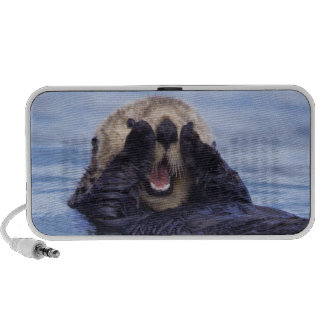 NA, USA, Alaska. Sea otters are the largest Mp3 Speaker