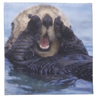 NA, USA, Alaska. Sea otters are the largest Napkin