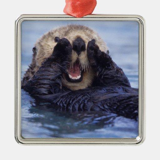 NA, USA, Alaska. Sea otters are the largest Christmas Tree Ornaments