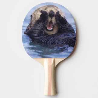 NA, USA, Alaska. Sea otters are the largest Ping-Pong Paddle