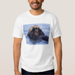 NA, USA, Alaska. Sea otters are the largest Shirt