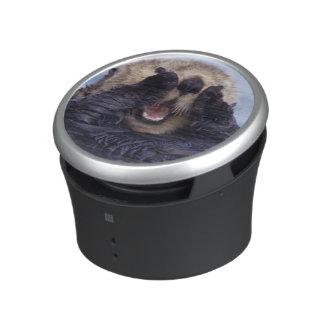 NA, USA, Alaska. Sea otters are the largest Speaker